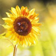 Sonne satt! So warm wird der Spätsommer (Foto)