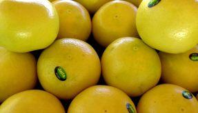 Bittere Grapefruit versüßt den Fettabbau (Foto)