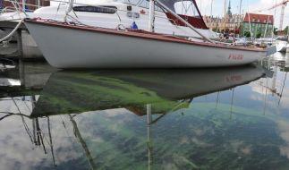 Blaualgen-Teppich auf der Ostsee (Foto)