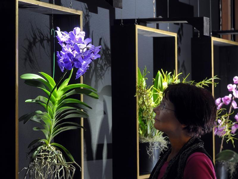 orchideen beschneiden orchideen schneiden nach der bl te. Black Bedroom Furniture Sets. Home Design Ideas