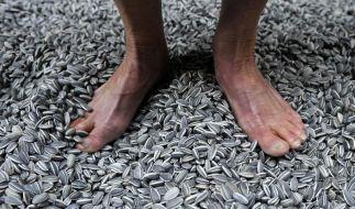Blei-Spuren in Ai Weiweis «Sonnenblumenkernen» (Foto)