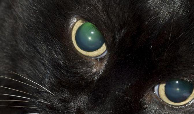 Blinden Katzen wenig Veränderung zumuten (Foto)