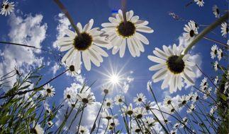 Blumen in der Sonne (Foto)