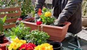 Blumenkästen schichtweise füllen (Foto)