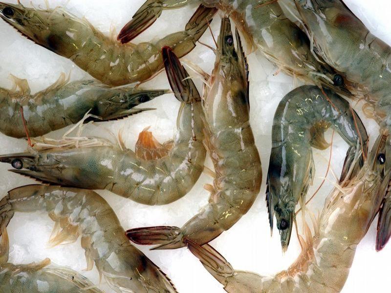 Ob die Wahrheit dass die Würmer vor dem Knoblauch fürchten