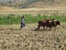 Blutiger Überfall: Die Sicherheitslage in Äthiopien (Foto)