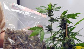 Cannabis  (Foto)