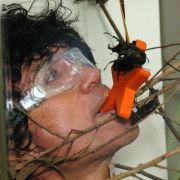 Das muss ein Dschungelkönig können: Mit fiesen Käfern um Sterne kämpfen - wie hier Costa Cordalis.