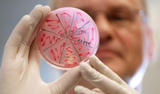 Darmbakterien töten Krankenhauskeime (Foto)