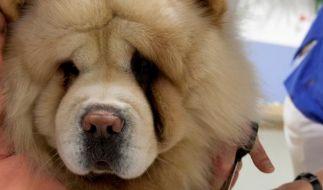 Das Beste fürs Tier: Wann Operationen sinnvoll sind (Foto)
