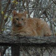 Das eigene Revier im Blick: Katzen.