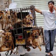 Das Hundefleischfestival in China ist eine Tradition, die weltweit Entsetzen und Proteste hervorruft. (Foto)