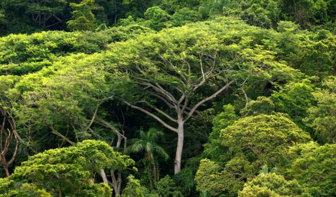 Das sind die Wald-Killer (Foto)