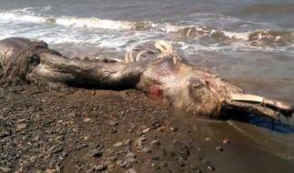 Gigantisches Seeungeheuer in Russland