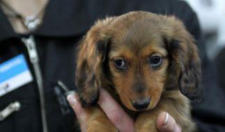 Das bringt nicht nur Tierschützer auf die Barrikaden: Ein Pärchen hatte Sex mit einem Hund und darf ihn sogar behalten. (Foto)