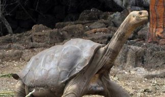 Das war Lonesome George. (Foto)