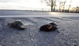 Dead Birds-Louisiana (Foto)
