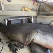 Der Hai landete an Bord von Selwoods Kutter. (Foto)