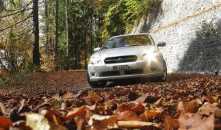...der Herbst ist da (Foto)