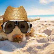 Hundertjähriger Kalender: So wird das Sommerwetter in Deutschland (Foto)