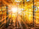 Der Hundertjährige Kalender verrät, wie das Wetter im September 2017 werden könnte. (Foto)