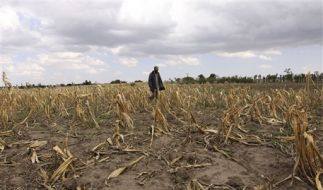 Der Klimawandel gefährdet auch landwirtschaftliche Nutzflächen. (Foto)