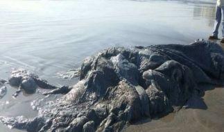 Der Körper des seltsamen Seeungeheuers sieht schon ziemlich mitgenommen aus. (Foto)