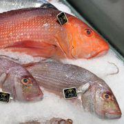 Der sogenannte Red Snapper könnte Giftstoffe enthalten. (Foto)