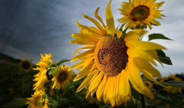Der Sommer lässt sich auch in der kommenden Woche wieder nur kurz blicken. (Foto)