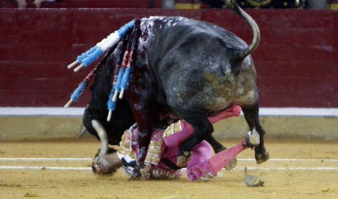 Der Stierkämpfer Juan Jose Padilla wird bei einem Kampf in Saragossa, Spanien, am 07.10.2011 schwer verletzt. Schon eine Woche nach einer grausigen Verletzung will er in die Arena zurückkehren. (Foto)