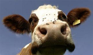 DEU Agrar Milch Preis Aigner Bundesrat (Foto)