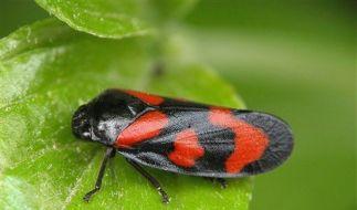 DEU Insekt des Jahres (Foto)