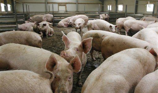 DEU Schweinegrippe (Foto)