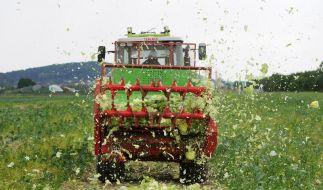 Deutsche Bauern bleiben auf frischem Gemüse sitzen (Foto)