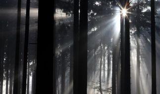 Deutschen Bäumen geht es besser (Foto)