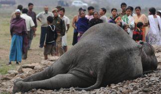 Die Elefantenkuh wurde von der Lok des Schnellzuges erfasst und überrollt. (Symbolbild) (Foto)