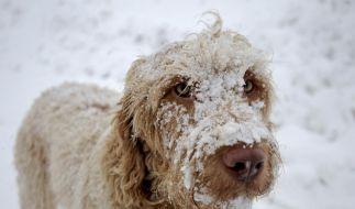 Die zweite Portion Schnee gibt's am kommenden Wochenende. (Foto)