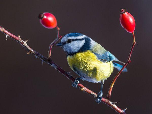 der garten januar was tun arbeiten – sweetmenu, Gartengerate ideen