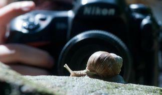 Diese Schnecke entkommt dem Fotografen für ein Makrobild nicht so einfach. Bei eher scheuen Tieren ist ein größerer Abstand nötig. (Foto)