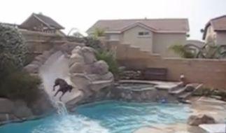 Dieser Dobermann liebt seine Wasserrutsche. (Foto)