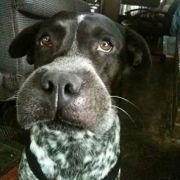 Diese Hunde riskieren eine dicke Lippe (Foto)