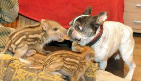 Doggy Baby und ihr adoptierter Nachwuchs (Foto)