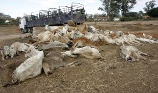 Dürre Kenia (Foto)