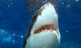 Durch die Hai-Attacke konnte der lebensgefährliche Tumor beim Familien-Vater entdeckt werden (Symbolbild). (Foto)