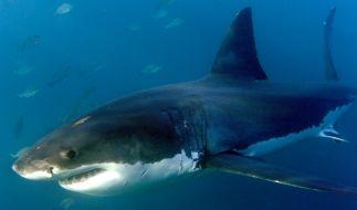 Ein 22-jähriger Surfer wurde in New South Wales (Australien) von einem Hai angegriffen. (Foto)