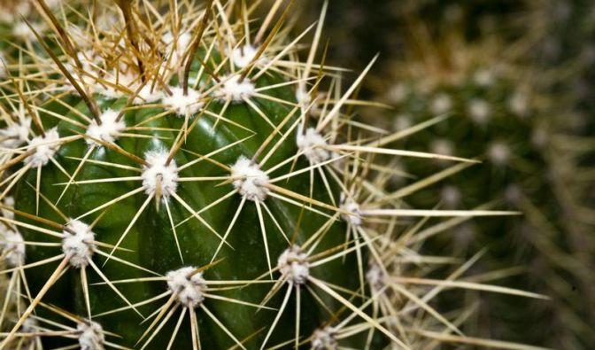 Ein Kaktus braucht es in der Nacht kühl (Foto)