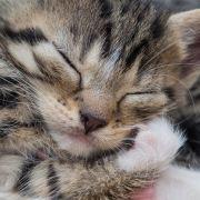 Ein grausam entstelltes Katzenbaby wurde auf einem Spielplatz gefunden. (Symbolbild) (Foto)