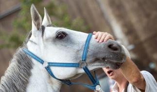 Ein Video beweist die Ekel-Taten des Tierarztes. (Foto)