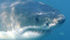 Den Hai verhauen