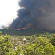 Brandstiftung! Unbekannte brennen 800 Hektar Wald nieder (Foto)